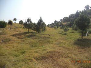 Horticulture-echs-d-18